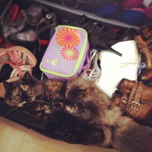 You probably shouldn't pack your cat...