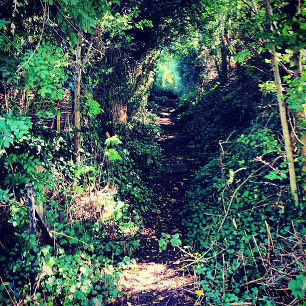 green path into the - photo #1