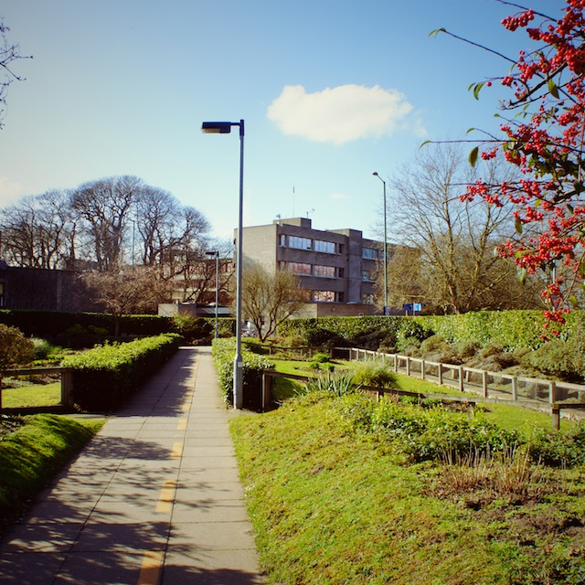 UEA campus greenery