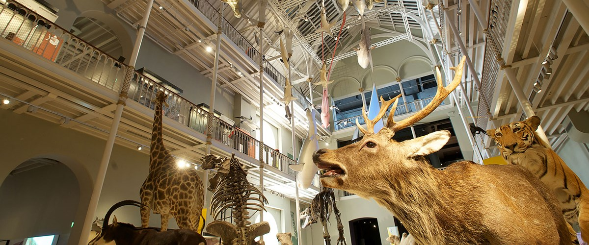 Exploring Edinburgh: National Museum of Scotland