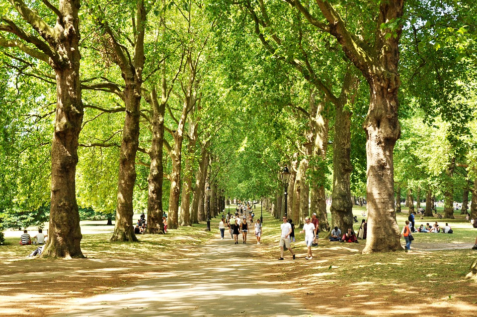 Green Park in London is a great place to rest and unwind during the summer while studying abroad in London