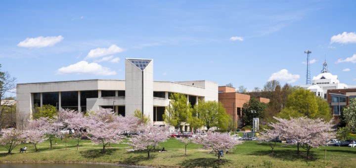 Mason Campus Cherry Blossoms