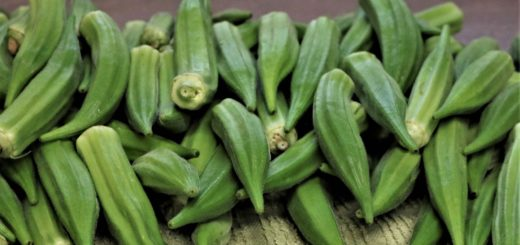 okra on a table